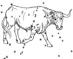 zodiac sign taurus the bull
